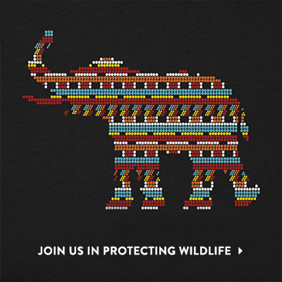 Join us in protecting wildlife